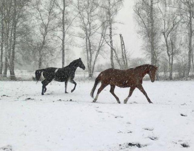 Zwei Schwangere im Schnee